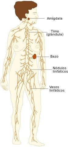Drenaje linfático