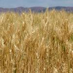 España a la cabeza de Europa en superficie dedicada a la agricultura ecológica.