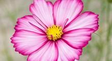 Flor destacada