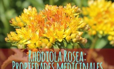 Rhodiola Rosea propiedades medicinales