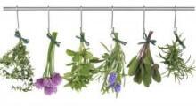 flores medicinales secando para ser utilizadas