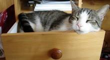 un gato dormido en un cajon